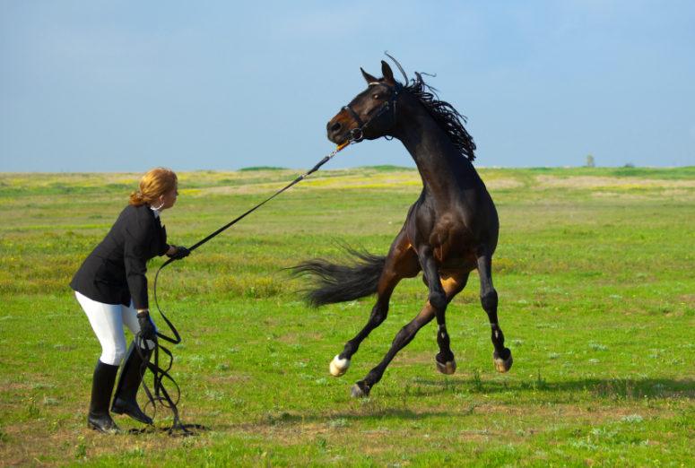 kobieta poskramia dzikiego konia